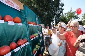 День Помидора в Минусинске